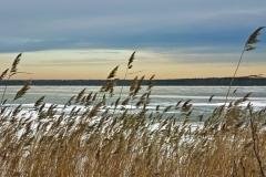 Травы и лед на закате