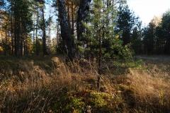 Лучи заката в лесу