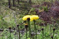Цветик и муха - Лемболово